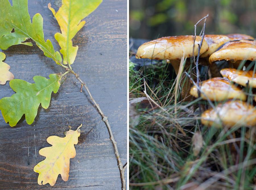 kilka jesiennych zdjęć