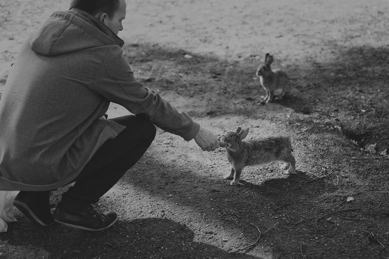 zwierzęta na ranczu grapa