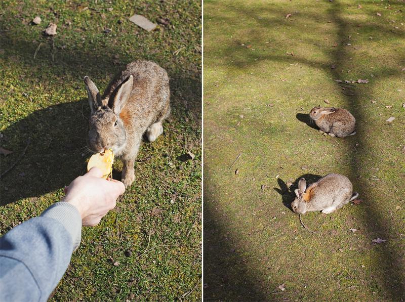 króliki na ranczu grapa