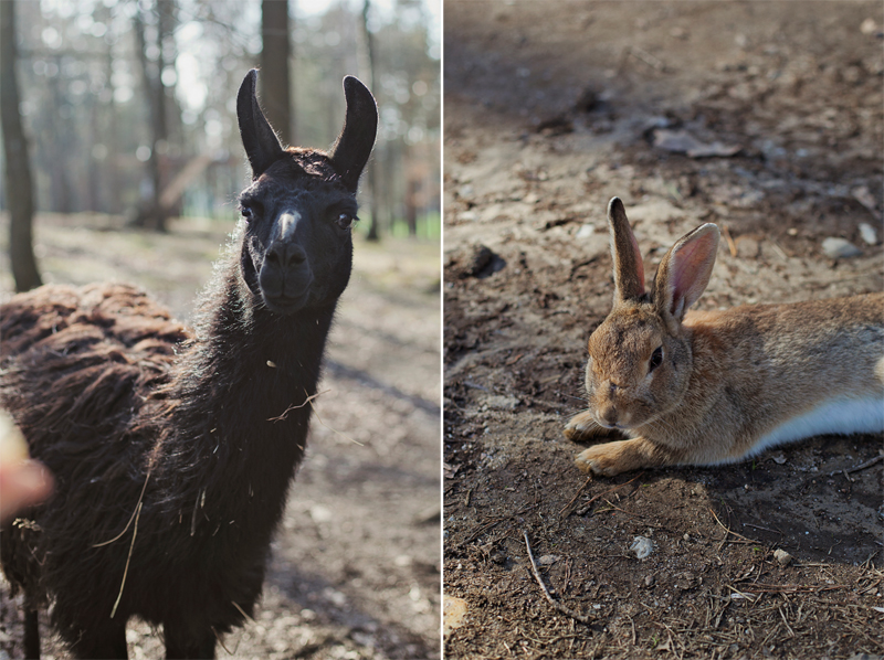 ranczo grapa zwierzęta