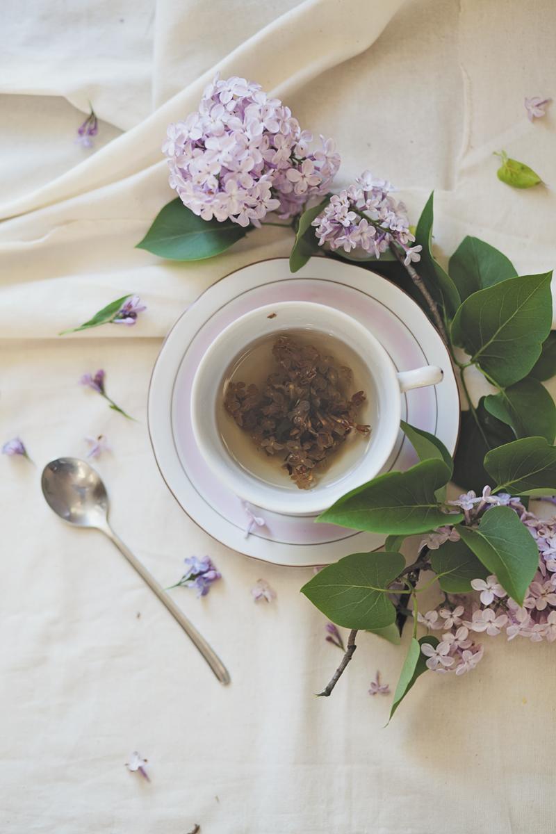 herbata z bzu